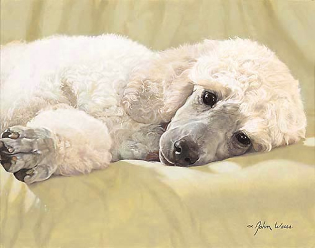 John Weiss Best Loved Breeds White Standard Poodle