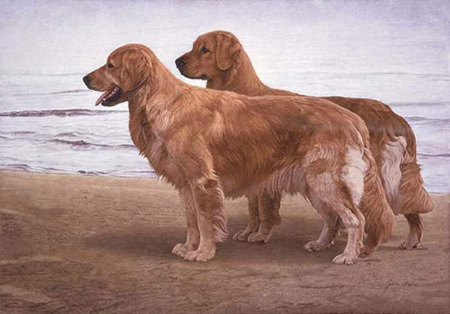 John Weiss Goldens at The Shore