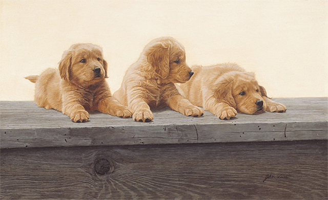 John Weiss Golden Retriever Puppies