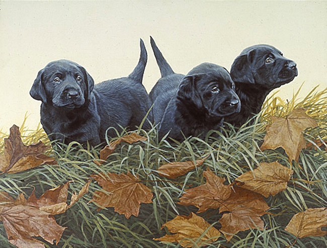 John Weiss Lab Puppies
