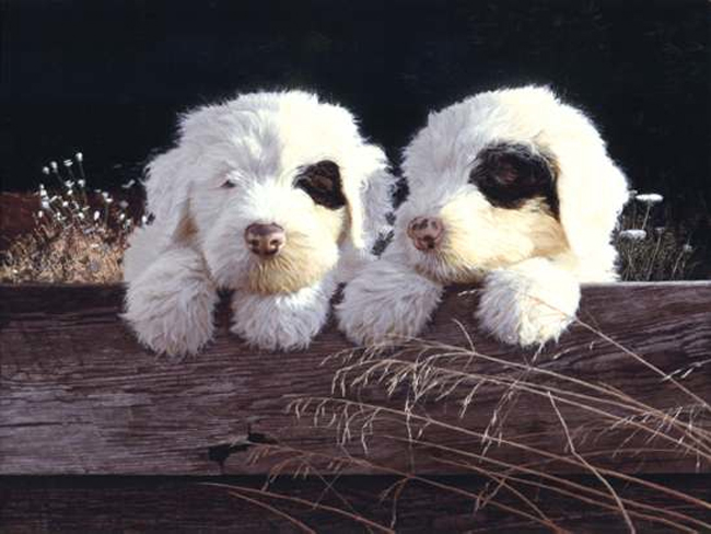 John Weiss Old English Sheepdog puppies