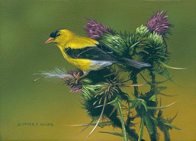 Derek Wicks American Golfinch and Thistle