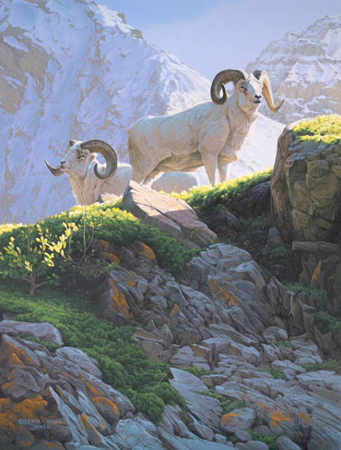Derek Wicks No Dolls Allowed Dall Sheep