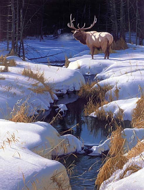 Derek Wicks Winter Sonata Bull Elk